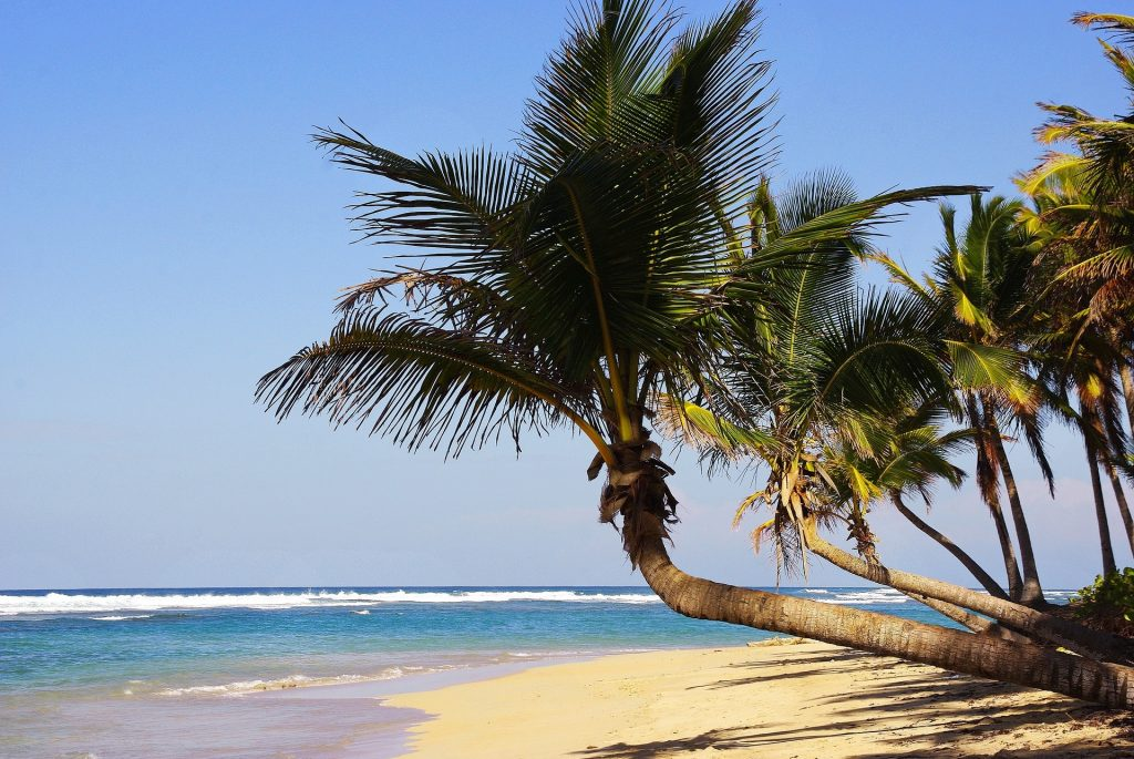 Dominican republic vendor guide 1024x685