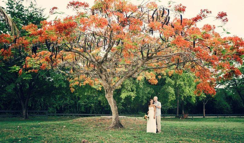 Kelly-and-Bo-under-the-Flamboyan-tree