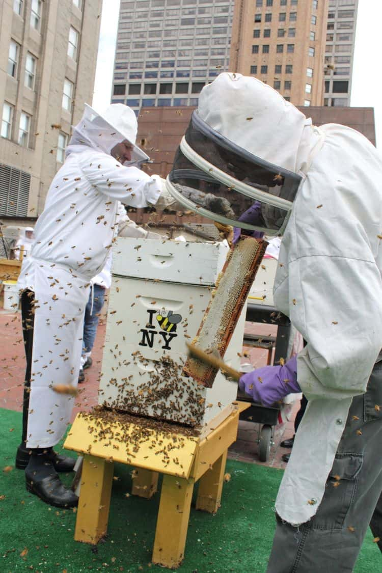 Waldorf Astoria Beehives
