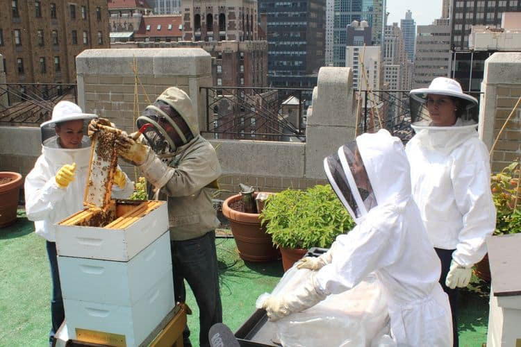 Waldorf Astoria Honey Harvest