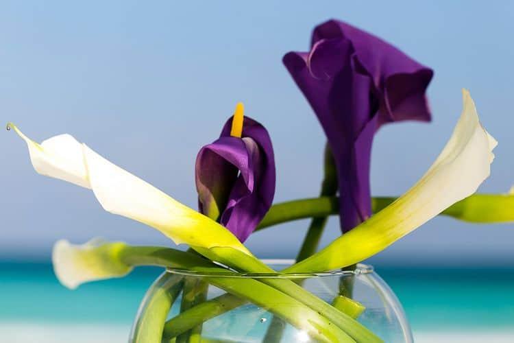 Lavender wedding lilies